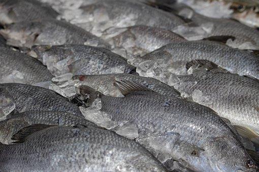 Fish, Market, Closeup, Food, Nature, Seafood, Fresh