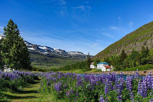 Iceland, Landscape, Seyðisfjörður, Nature, Travel