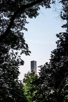 New York, Central Park, Manhattan, Nature, Park, Trees