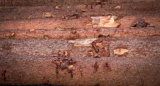 Wood, Tree Trunks, Annual Rings, Strains, Forest, Tree