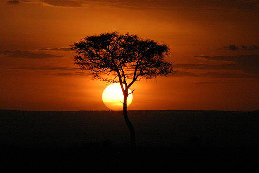 Masai Mara, Sunset, Kenya, Africa, Acacia, Horizon