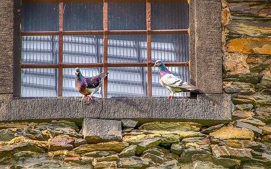 Nature, Architecture, Dove, Animal