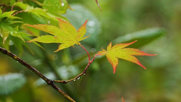 The Leaves, Autumn Leaves, Nature, Leaf, Forest, Color