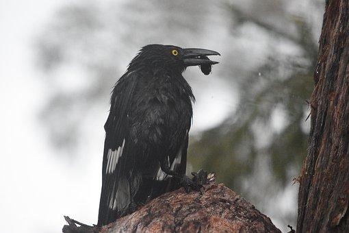 Bird, Bird In Tree, Magpie, Nature
