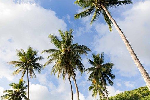 Coconut, Sky, Beach, Blue, Coconut Trees, Palm