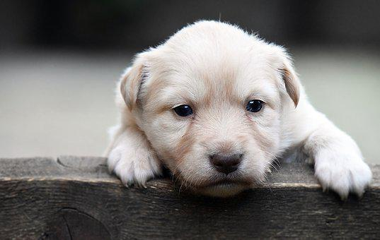 Dog, Cute, Mammal, Pet, Puppy, Animal, Concerns, Sweet