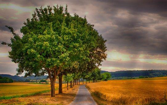Landscape, Nature, Cornfield, Grain, Tree