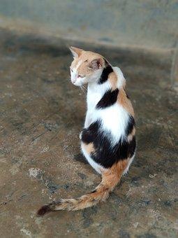 Cat, Pussycat, Feline, Patches