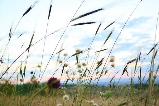 Herbs, Plant, Flower, Ot, Nature