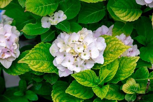 Magic, Flower, Green, White, Garden, Winter, Outdoor
