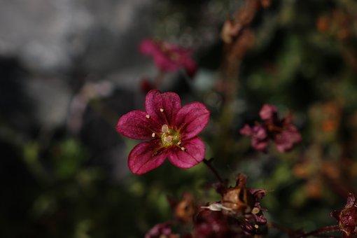 Shade, Summer, Flower