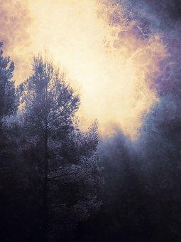 Background, Cover, Mystical, Forest, Dark, Glade, Light