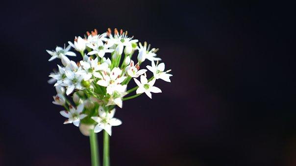 Flowers, White, Nature, Plants, Garden, Season Them