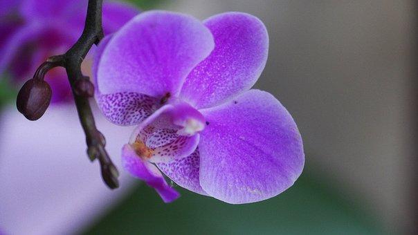 Pink, Flowers, Nature, Plants, Red, Garden, Season