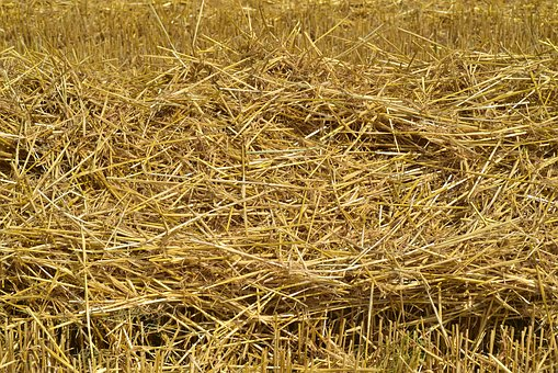 Straw, Hay, Rural, Agriculture, Nature, Field, Stubble