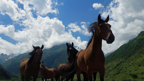 Horse, Horses, Mountains, Sky, Clouds, Nature