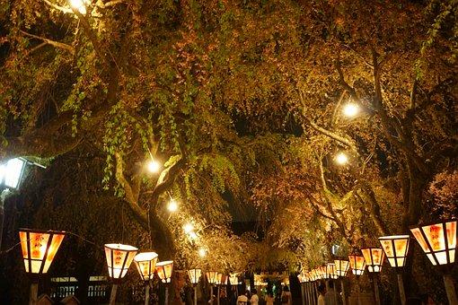Orange, Lantern, Seasonal, Light, Festival, Spring