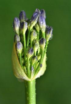 Blossom, Bloom, Bud, Leek Greenhouse, Early