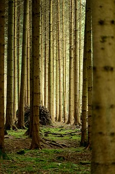 Forest, Tree Trunks, Mood