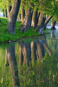 Nature, Water, Morning, Reflection, Landscape