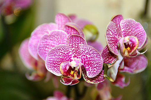 Orquideas, Flower, Flora, Nature, Orchid, Tropical