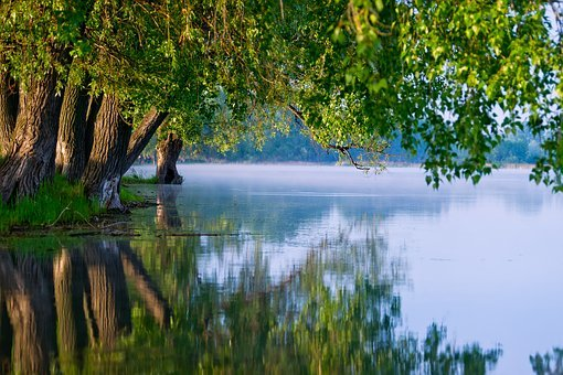 Water, Nature, Green, River, Landscape, Beautiful