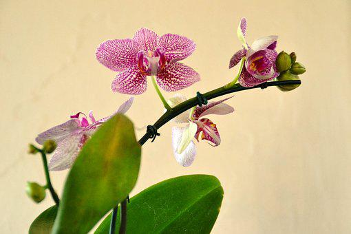 Orquidea, Flower, Nature, Plant, Orchids, Flowers
