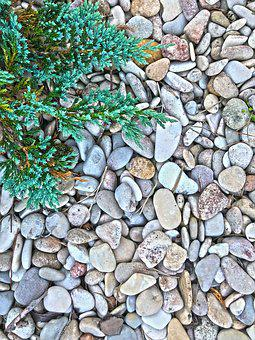Pebbles, Spruce, Stones, Nature, Plant, Land, Needles