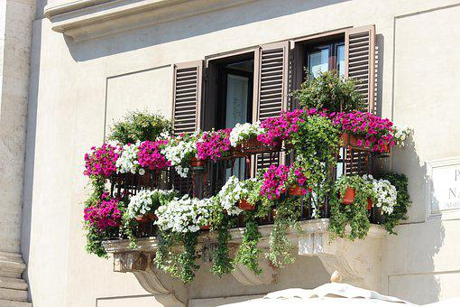 Italy, Window, City, Old, Flowers, Urban, Shutters