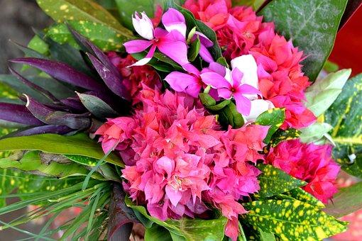 Flower, Pot Bouquet, Nature