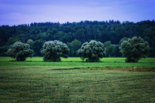 Tree, Nature, Green, Quartet, Landscape, Forest