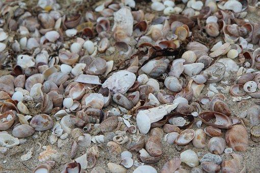 Shells, Beach, Brittany, Quiberon, Sand, Shell, Sea