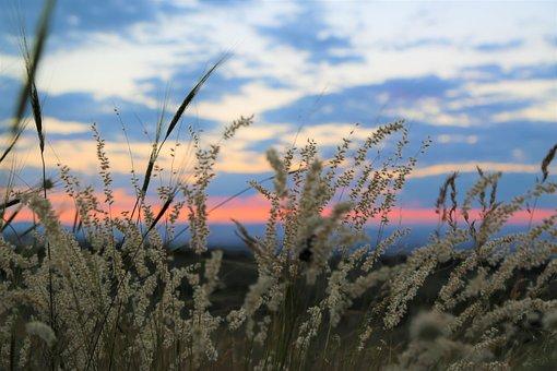 Herbs, Horizon, Ot, Nature, Sky, Solar, Plant