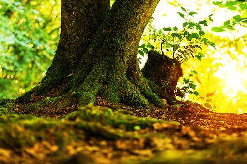 Log, Tree, Tribe, Moss, Forest, Nature, Sun, Sunbeam