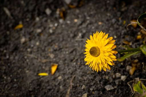 Yellow, Sun, Sunflower, Nature, Summer, Bloom, Colorful