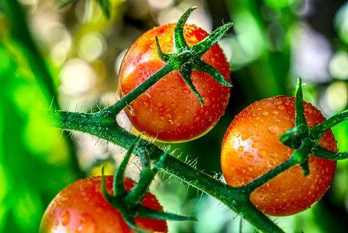 Tomato, Ripe, Mature, Vegetables, Red, Food, Fresh