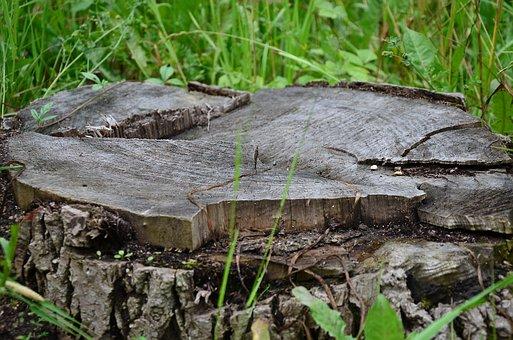 Stump, Tree, Nature, Grass, Wood
