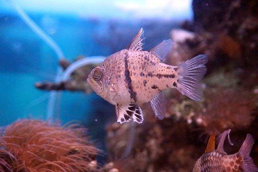 Fish, Tropical, Sea, Aquarium, Underwater, Animal, Blue