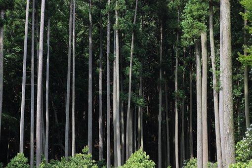 Forest, Tsushima, Views, Sea, Nostalgia, Woods
