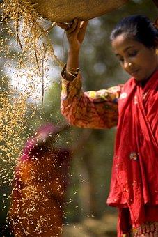 Harvesting, Village, Women