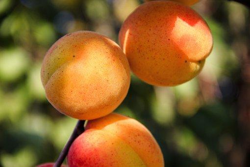 Apricots, Fruit, Sweet, Ripe, Vitamins, Fresh