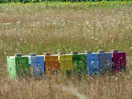 Hives, Bees, Honey, Nature, Beekeeping, Pollen, Wild