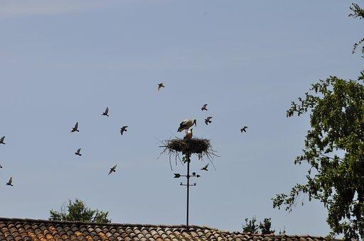 Nest, Stork, Roof, Small, Nature, Animal, Birds, Bird