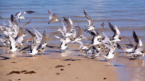 Sea, Birds, Flight