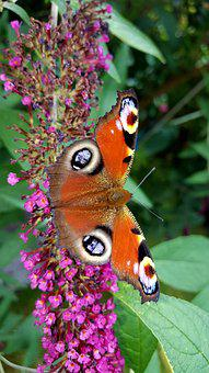 Butterfly, Nature, Insect, Animal, Animal World, Summer