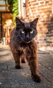 Pet, Cat, Domestic Cat, Cat's Eyes, Cat Face, Portrait