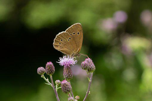 Butterfly, Summer, Blossom, Bloom, Macro, Close Up