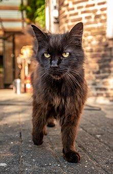 Pet, Cat, Domestic Cat, Cat's Eyes, Cat Face, Close Up