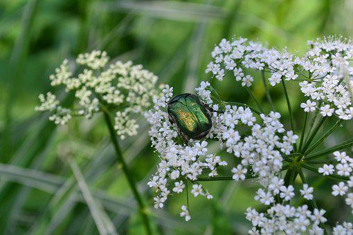 Beetle, Nature, Insect, Colorful, Pollen, Wings