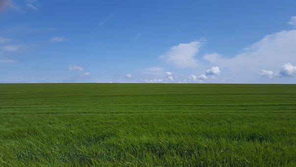 Dorset, Cornfields, Blue Skies, Summer, England